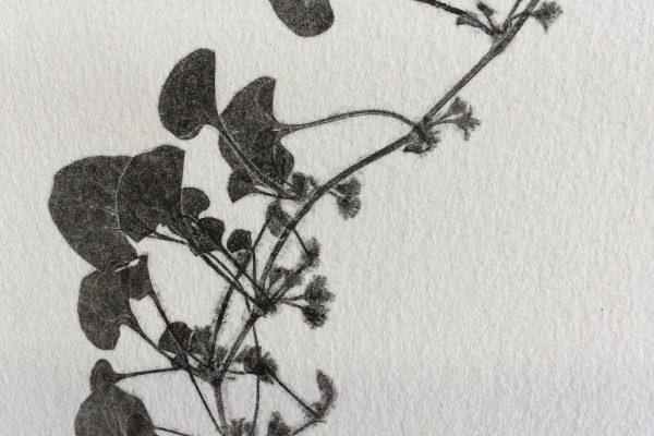 nature print 1